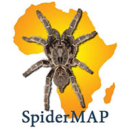 SpiderMap Virtual Museum